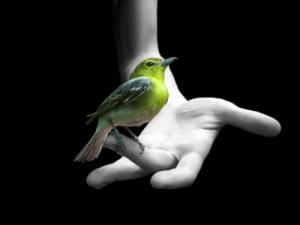 confianza-ave