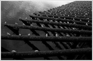 Image: 'Cien gaviotas'. Found on flickrcc.net
