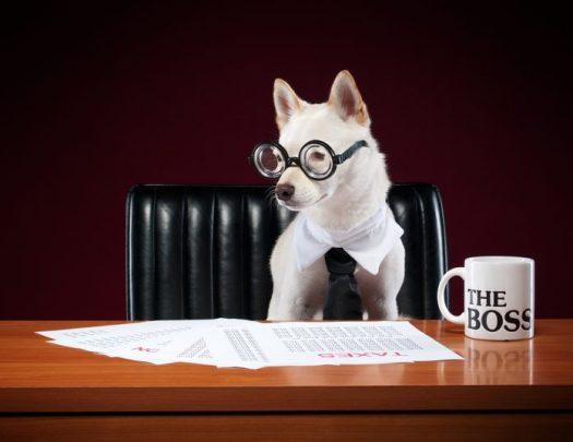 Mi jefe es un perro